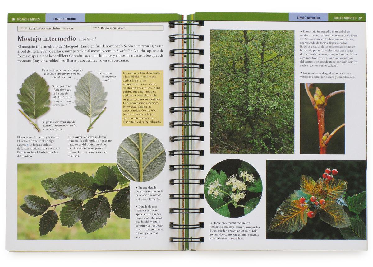 Rboles y arbustos de asturias pandiella y ocio - Arboles y arbustos ...